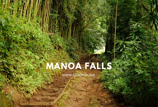 Manoa Falls Trail Hike Adventure for the Brave