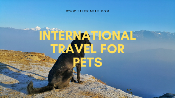 International Travel for Pets – Seven Steps to Remember