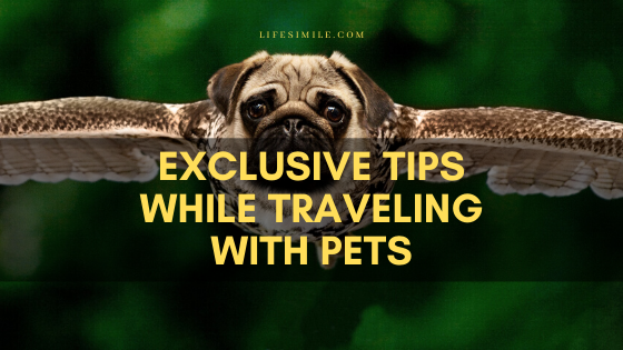 exclusive tips while traveling with pets.