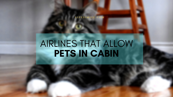 Cheap and Reliable Airlines that Allow Pets in Cabin