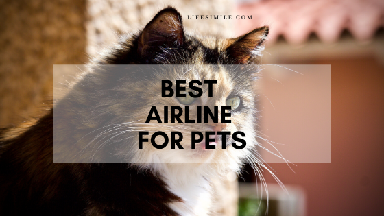 best airline for pets