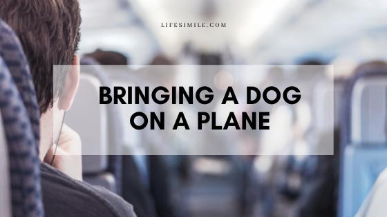 bringing a dog on a plane