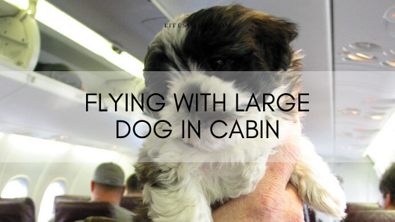 flying with large dog in cabin