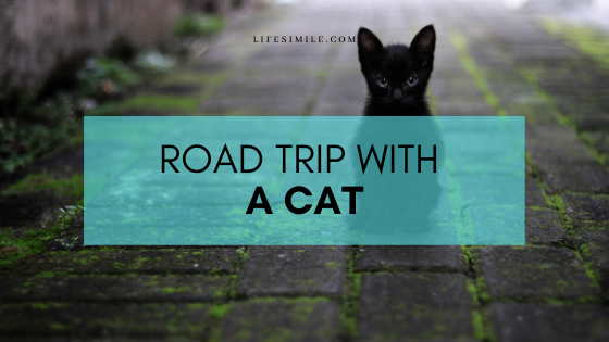 road trip with cat