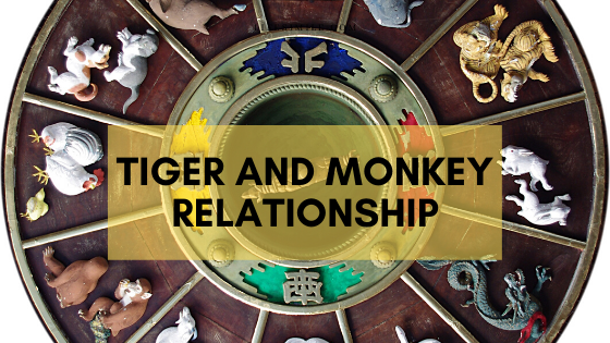 tiger and monkey relationship