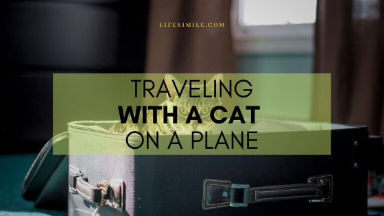 traveling with a cat on a plane