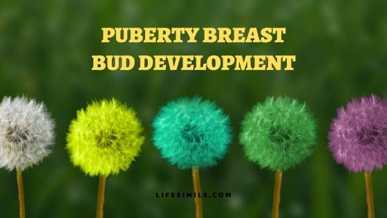 Puberty Breast Bud Development – What to Know
